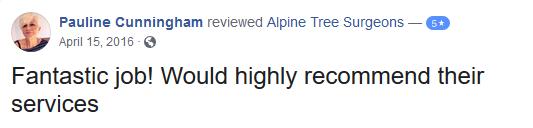 Pauline review2