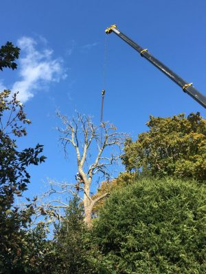 Basingstoke tree removal