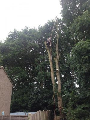 TREE REMOVAL 6