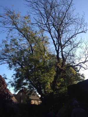 TREE REMOVAL A