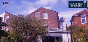 tree service in guildford