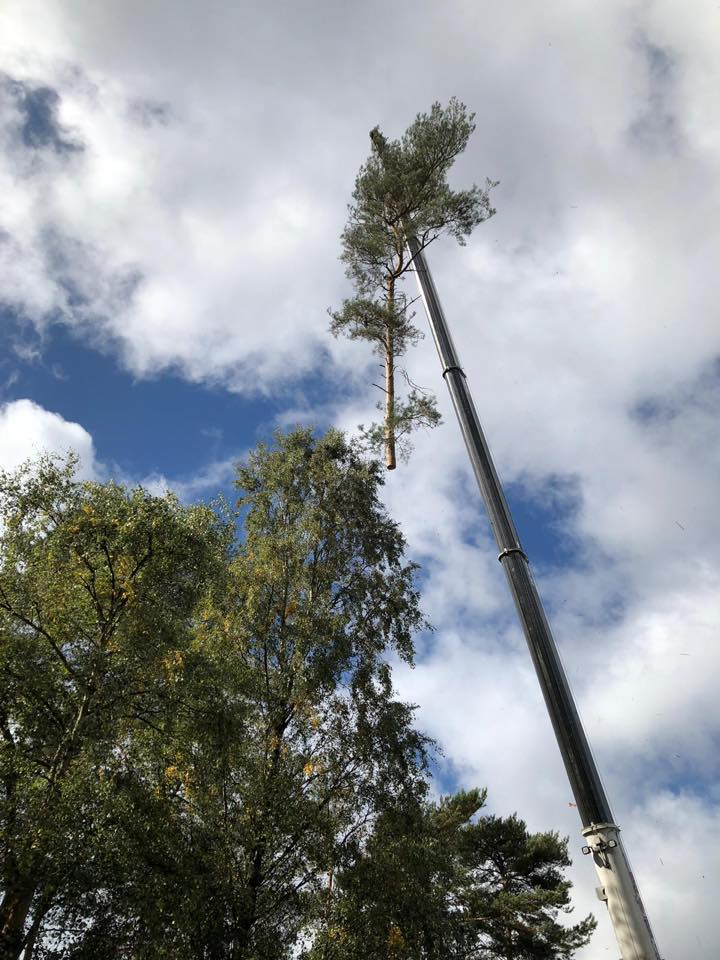 Tree felling in actual field - tree care and maintenance in southampton - tree surgeons - tree surgery - tree surgeon tree specialist