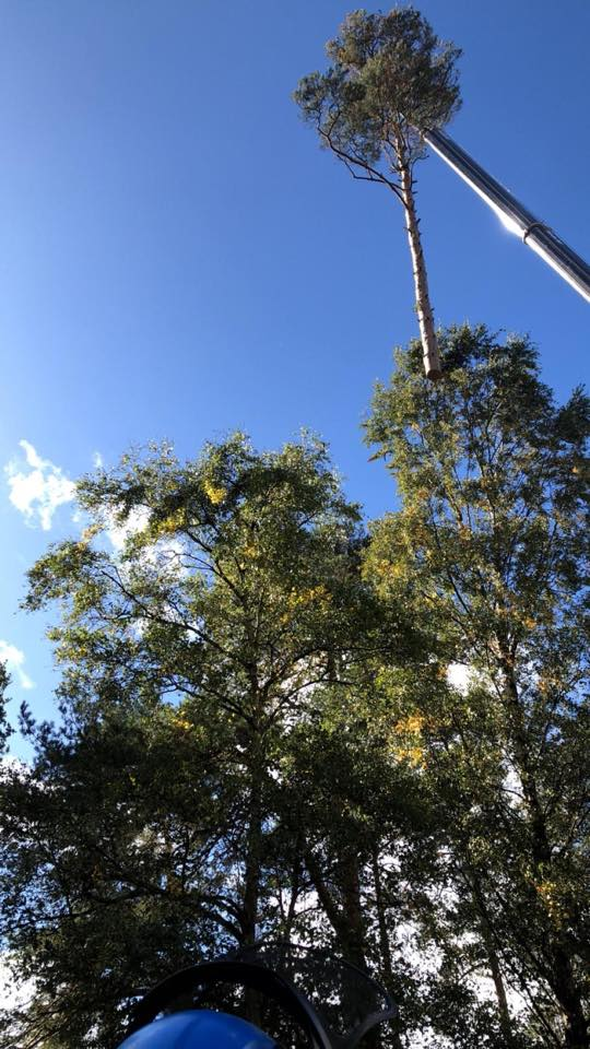 Tree Surgeons Southampton crane usage