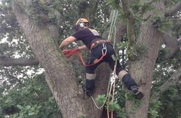 crane-tree-removal-2---front-h(1)