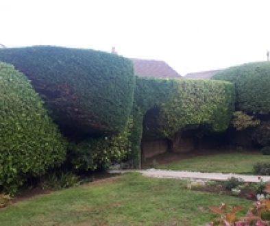 hedge-cutting-in-hayling-islan