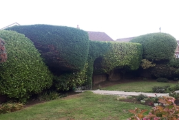 hedge-cutting-in-hayling-islan