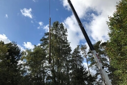 tree care and maintenance - tree surgeons - tree care and maintenance in southampton - tree surgeons - tree surgery - tree surgeon tree specialist tree surgery - tree surgeon - tree specialist