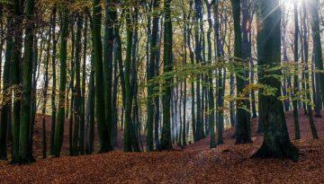 trees-1030981_1920(1)(1)